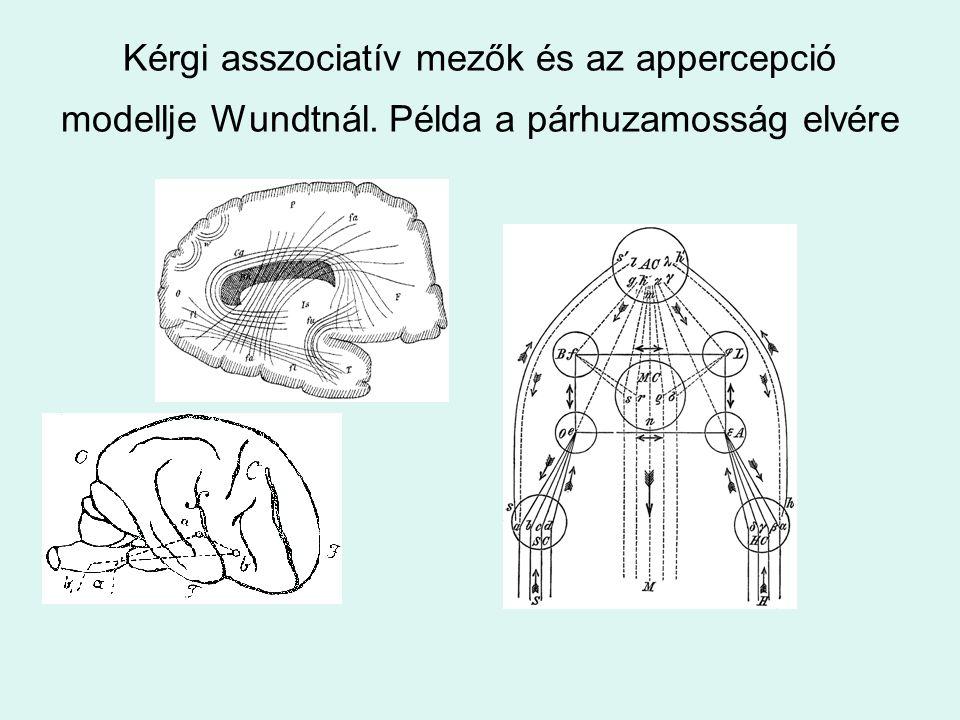 Kérgi asszociatív mezők és az appercepció modellje Wundtnál. Példa a párhuzamosság elvére