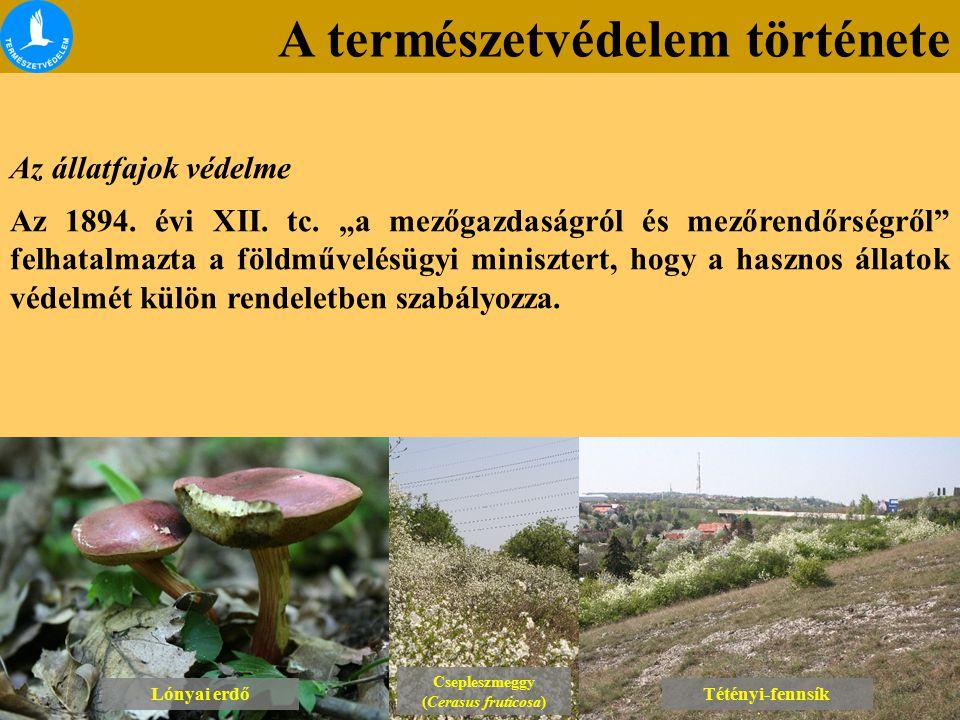 A természetvédelem története Lónyai erdő Csepleszmeggy (Cerasus fruticosa) Csepleszmeggy (Cerasus fruticosa) Tétényi-fennsík Az állatfajok védelme Az 1894.