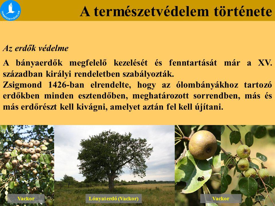 A természetvédelem története Az erdők védelme A bányaerdők megfelelő kezelését és fenntartását már a XV. században királyi rendeletben szabályozták. Z