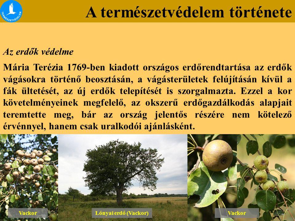 A természetvédelem története Az erdők védelme Mária Terézia 1769-ben kiadott országos erdőrendtartása az erdők vágásokra történő beosztásán, a vágáste