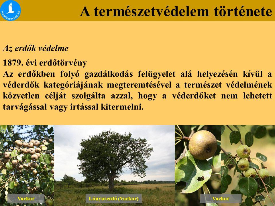 A természetvédelem története Az erdők védelme 1879. évi erdőtörvény Az erdőkben folyó gazdálkodás felügyelet alá helyezésén kívül a véderdők kategóriá