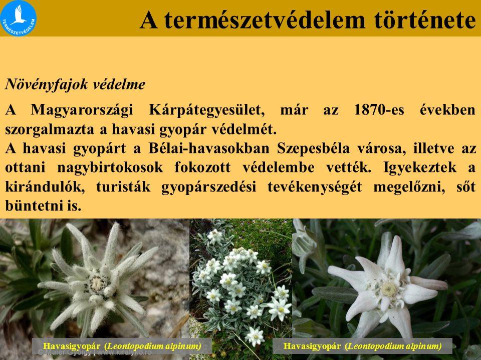 A természetvédelem története Növényfajok védelme A Magyarországi Kárpátegyesület, már az 1870-es években szorgalmazta a havasi gyopár védelmét. A hava