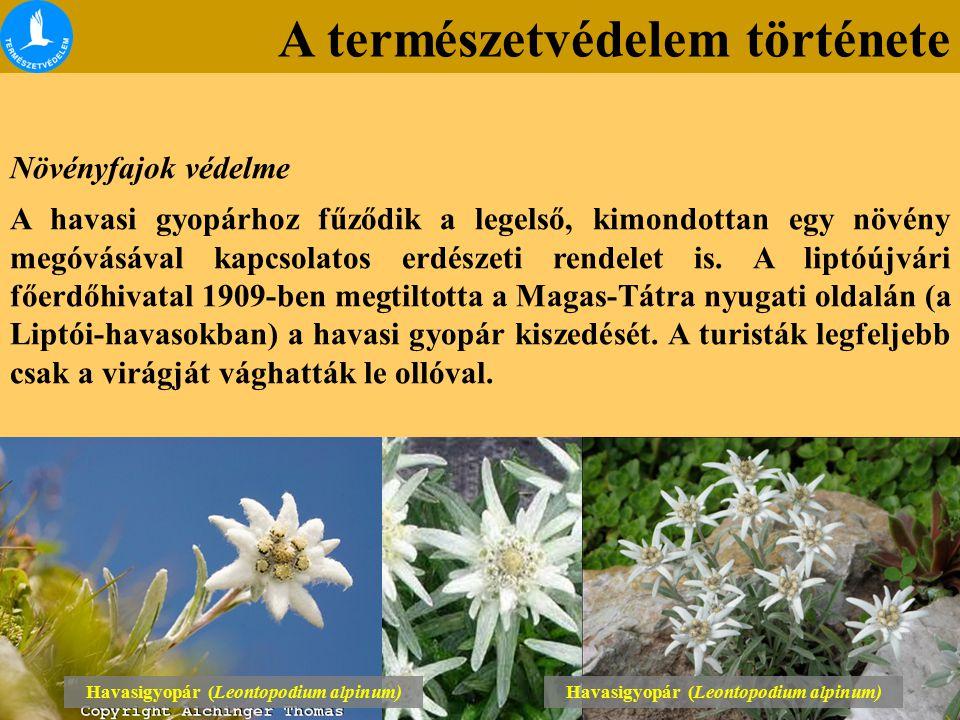 A természetvédelem története Növényfajok védelme A havasi gyopárhoz fűződik a legelső, kimondottan egy növény megóvásával kapcsolatos erdészeti rendelet is.