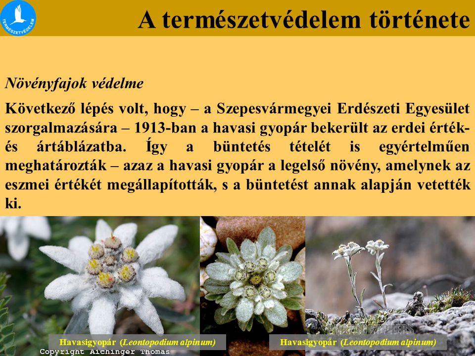 A természetvédelem története Növényfajok védelme Következő lépés volt, hogy – a Szepesvármegyei Erdészeti Egyesület szorgalmazására – 1913-ban a havasi gyopár bekerült az erdei érték- és ártáblázatba.