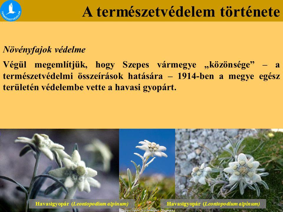 """A természetvédelem története Növényfajok védelme Végül megemlítjük, hogy Szepes vármegye """"közönsége – a természetvédelmi összeírások hatására – 1914-ben a megye egész területén védelembe vette a havasi gyopárt."""