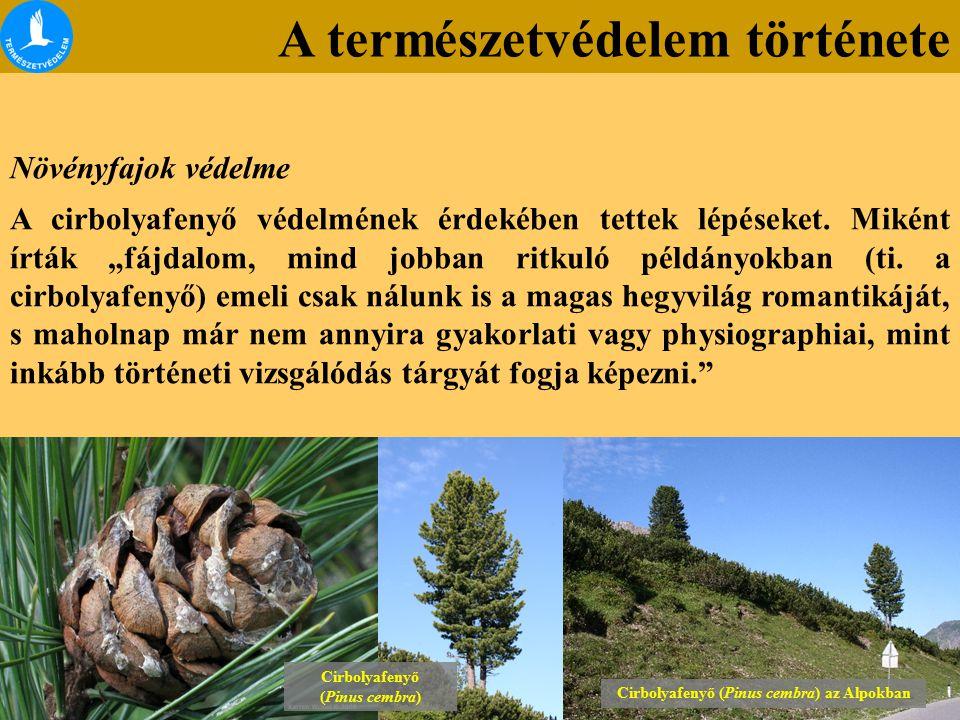 """A természetvédelem története Lónyai erdő Növényfajok védelme A cirbolyafenyő védelmének érdekében tettek lépéseket. Miként írták """"fájdalom, mind jobba"""