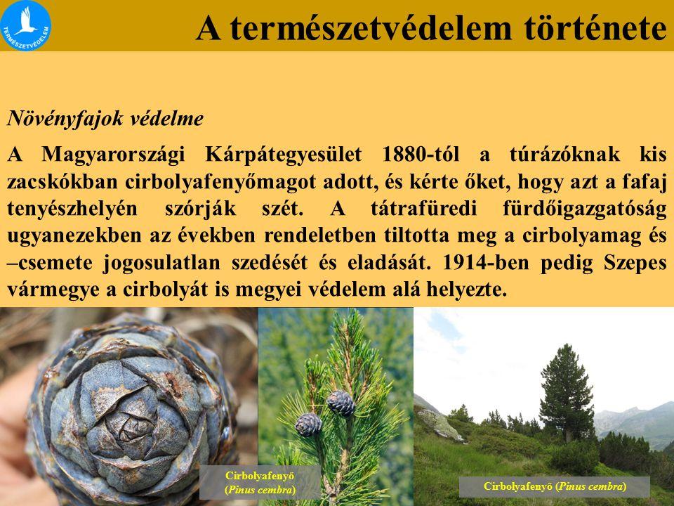 A természetvédelem története Növényfajok védelme A Magyarországi Kárpátegyesület 1880-tól a túrázóknak kis zacskókban cirbolyafenyőmagot adott, és kérte őket, hogy azt a fafaj tenyészhelyén szórják szét.