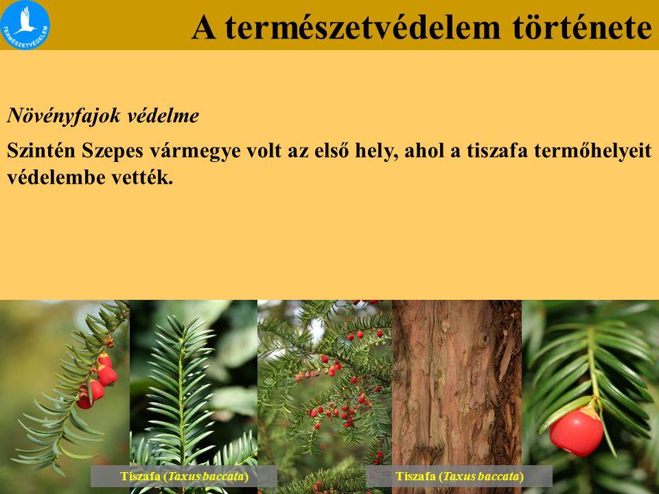 A természetvédelem története Növényfajok védelme Szintén Szepes vármegye volt az első hely, ahol a tiszafa termőhelyeit védelembe vették. Tiszafa (Tax