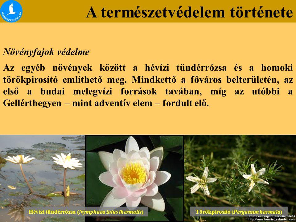 A természetvédelem története Növényfajok védelme Az egyéb növények között a hévízi tündérrózsa és a homoki törökpirosító említhető meg. Mindkettő a fő