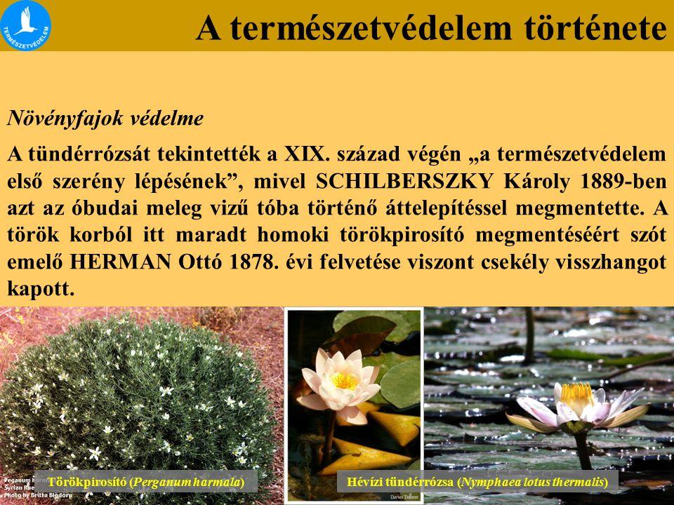"""A természetvédelem története Növényfajok védelme A tündérrózsát tekintették a XIX. század végén """"a természetvédelem első szerény lépésének"""", mivel SCH"""