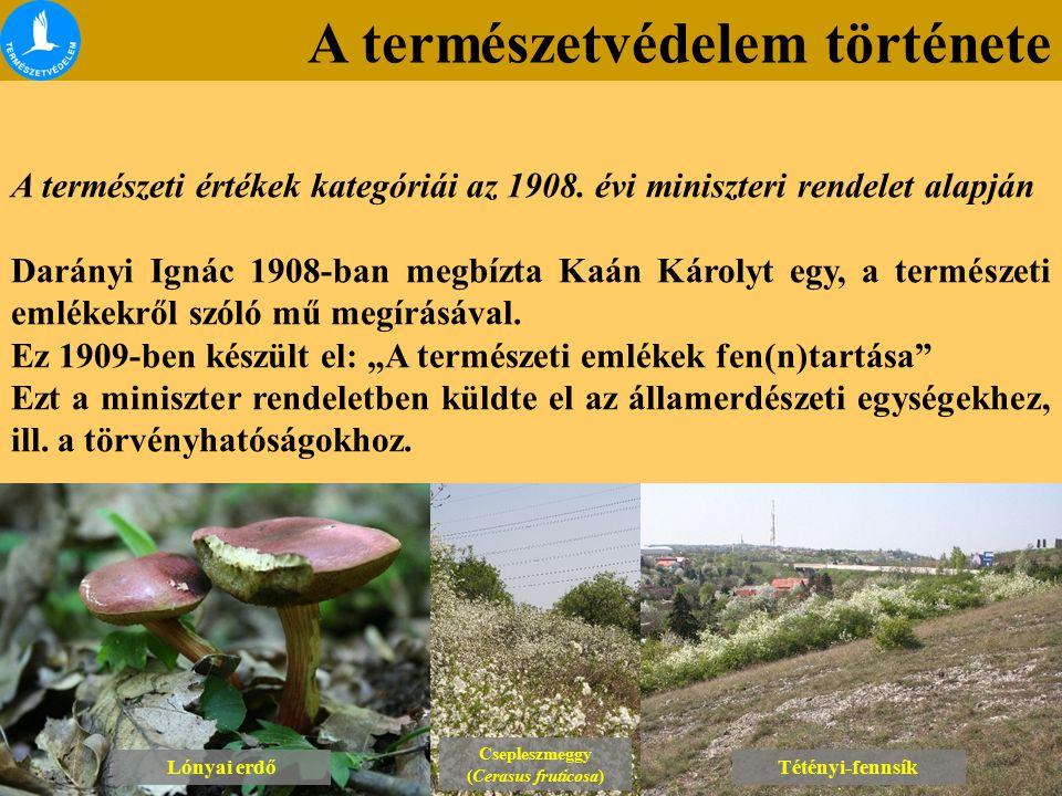 A természetvédelem története Lónyai erdő Csepleszmeggy (Cerasus fruticosa) Csepleszmeggy (Cerasus fruticosa) Tétényi-fennsík A természeti értékek kategóriái az 1908.