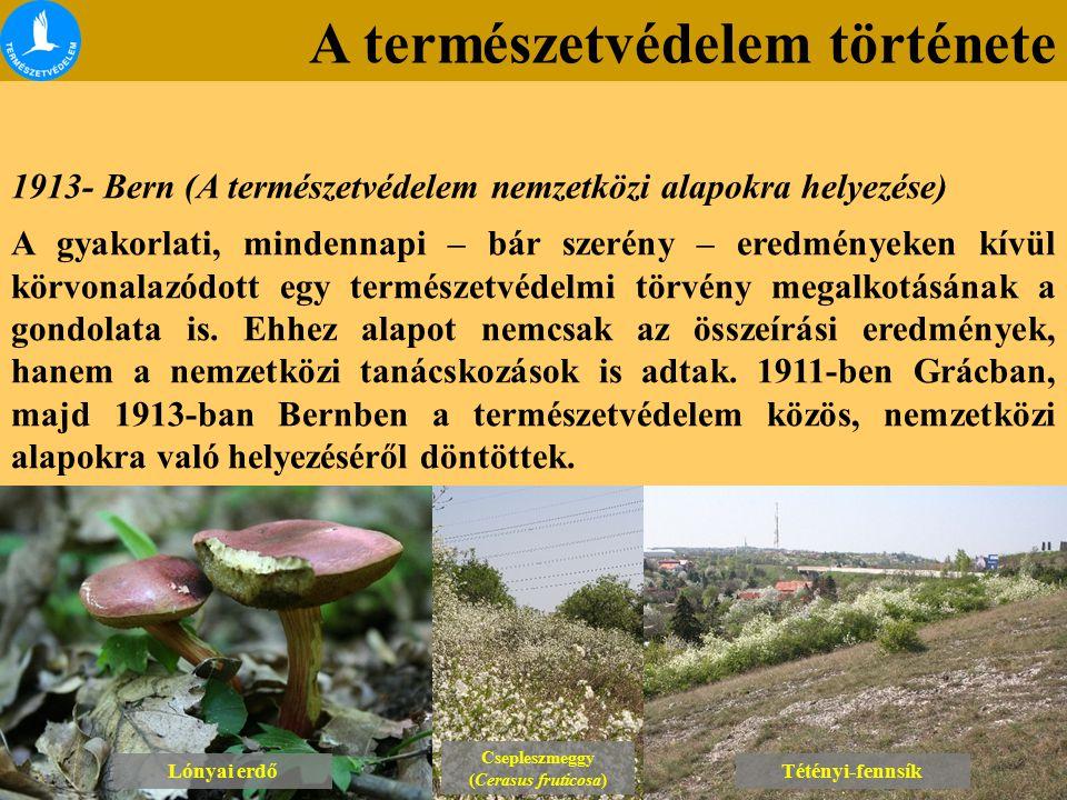 A természetvédelem története Lónyai erdő Csepleszmeggy (Cerasus fruticosa) Csepleszmeggy (Cerasus fruticosa) Tétényi-fennsík 1913- Bern (A természetvé