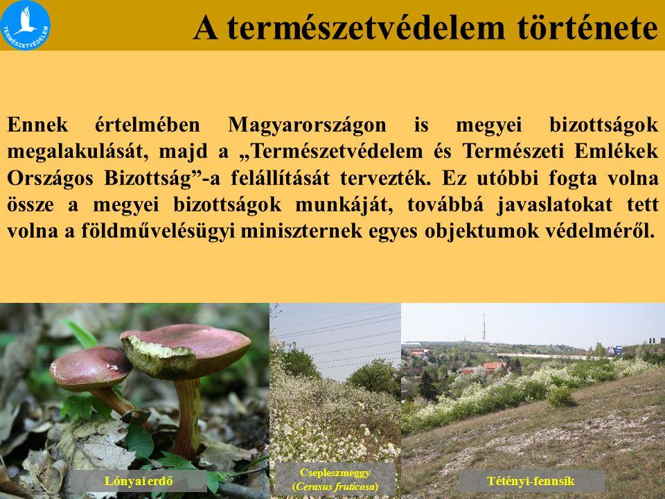 A természetvédelem története Lónyai erdő Csepleszmeggy (Cerasus fruticosa) Csepleszmeggy (Cerasus fruticosa) Tétényi-fennsík Ennek értelmében Magyaror