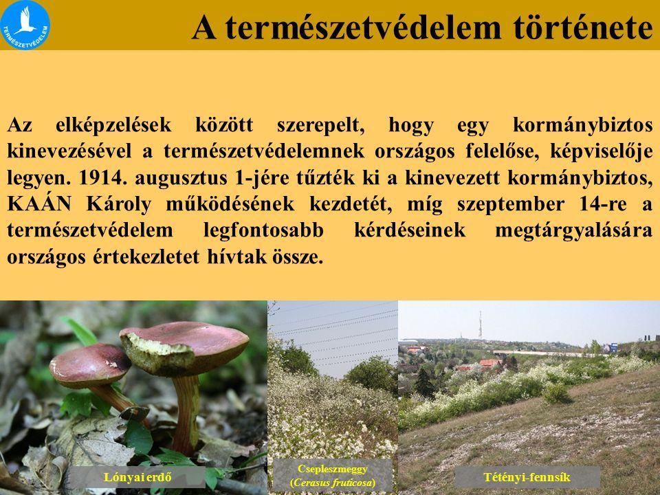 A természetvédelem története Lónyai erdő Csepleszmeggy (Cerasus fruticosa) Csepleszmeggy (Cerasus fruticosa) Tétényi-fennsík Az elképzelések között szerepelt, hogy egy kormánybiztos kinevezésével a természetvédelemnek országos felelőse, képviselője legyen.