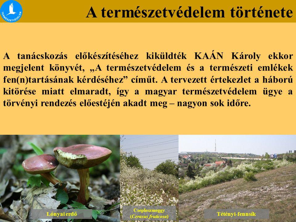 A természetvédelem története Lónyai erdő Csepleszmeggy (Cerasus fruticosa) Csepleszmeggy (Cerasus fruticosa) Tétényi-fennsík A tanácskozás előkészítés