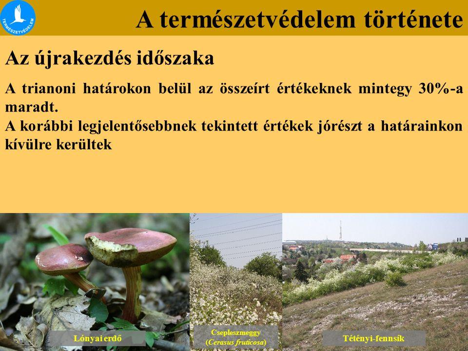 A természetvédelem története Az újrakezdés időszaka Lónyai erdő Csepleszmeggy (Cerasus fruticosa) Csepleszmeggy (Cerasus fruticosa) Tétényi-fennsík A trianoni határokon belül az összeírt értékeknek mintegy 30%-a maradt.