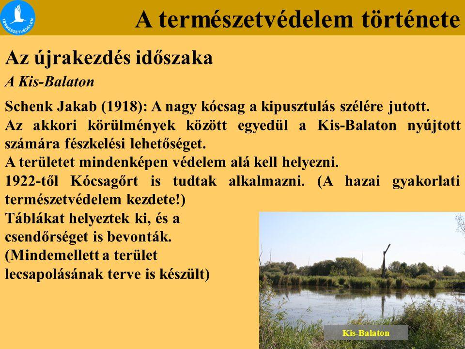 A természetvédelem története Az újrakezdés időszaka A Kis-Balaton Schenk Jakab (1918): A nagy kócsag a kipusztulás szélére jutott. Az akkori körülmény
