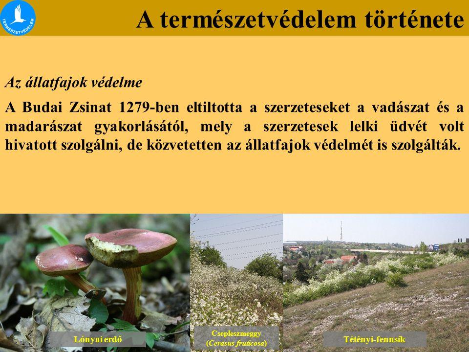 A természetvédelem története Kibontakozási szakasz (1972-től) Lónyai erdő Tétényi-fennsík Hortobágyi Nemzeti Park Természetvédelmi felügyelőségek létrehozása A kialakított körzetekben fokozatosan létrehozták a Természetvédelmi felügyelőségeket is.