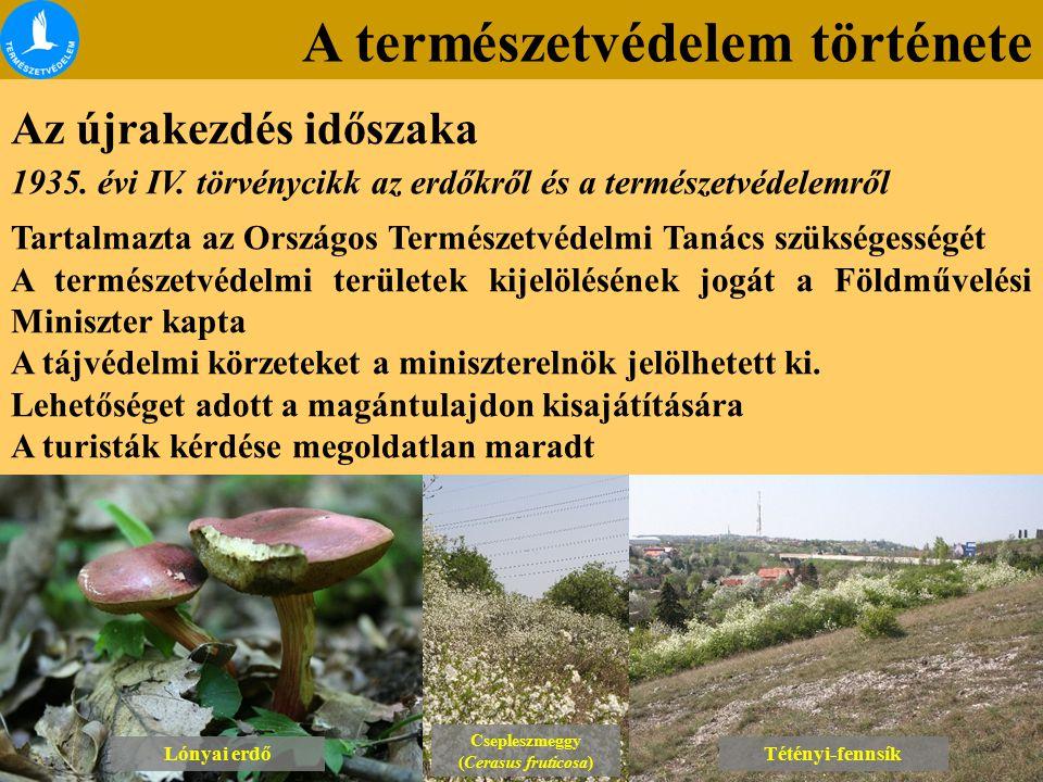 A természetvédelem története Az újrakezdés időszaka Lónyai erdő Csepleszmeggy (Cerasus fruticosa) Csepleszmeggy (Cerasus fruticosa) Tétényi-fennsík 1935.