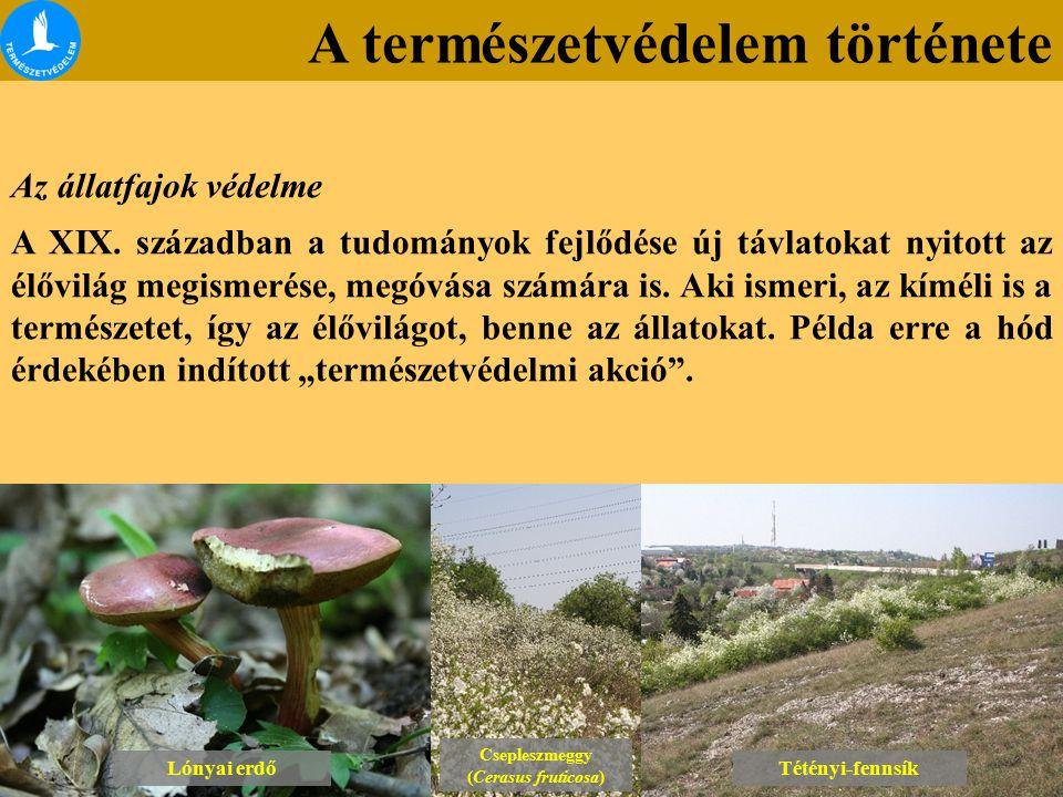 A természetvédelem története Lónyai erdő Csepleszmeggy (Cerasus fruticosa) Csepleszmeggy (Cerasus fruticosa) Tétényi-fennsík Az állatfajok védelme A Magyar Orvosok és Természetvizsgálók 1842.