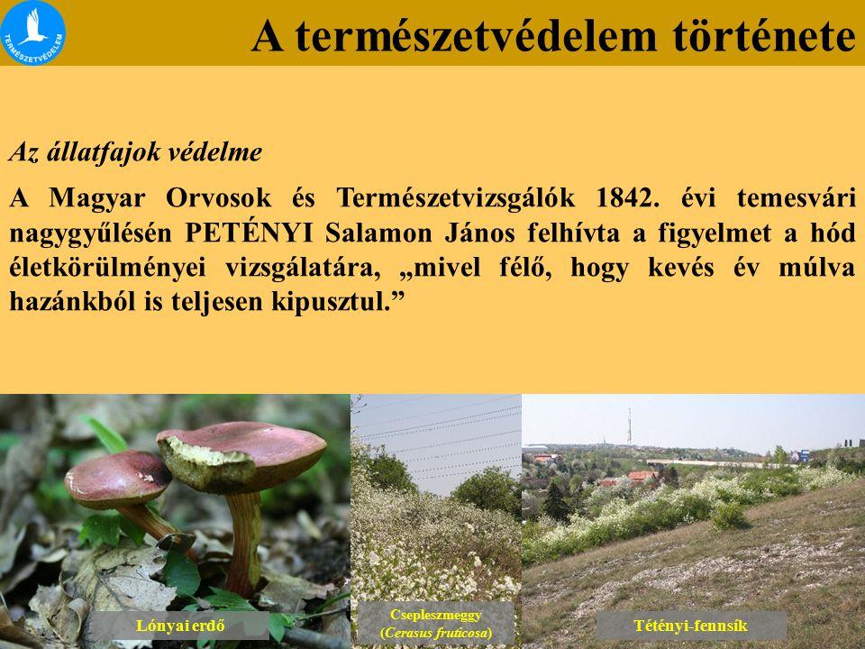 A természetvédelem története Lónyai erdő Csepleszmeggy (Cerasus fruticosa) Csepleszmeggy (Cerasus fruticosa) Tétényi-fennsík Az állatfajok védelme A M