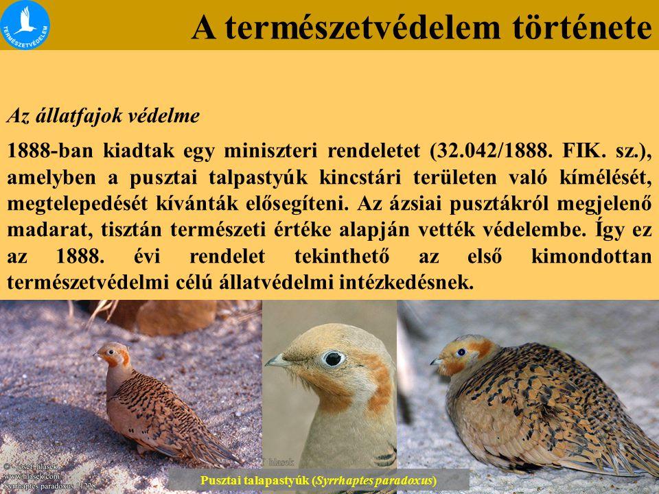 Lónyai erdő Tétényi-fennsík Az állatfajok védelme 1888-ban kiadtak egy miniszteri rendeletet (32.042/1888. FIK. sz.), amelyben a pusztai talpastyúk ki