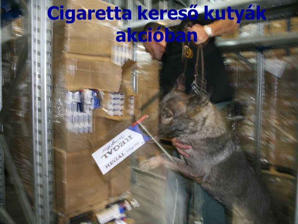 Cigaretta kereső kutyák akcióban