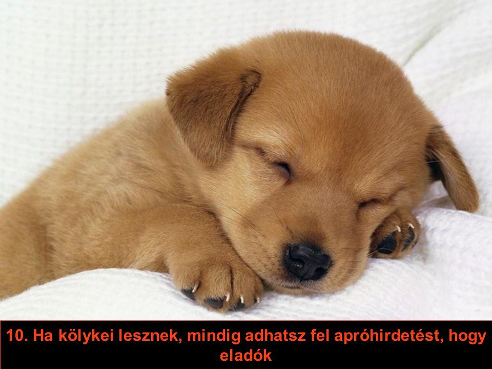 8. Ha idegen kutya illatát észleli rajtad, nem kezd őrjöngeni, sőt – érdekesebb leszel számára