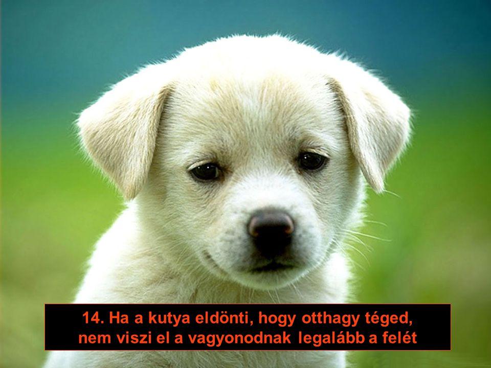 13. A kutya sosem ébreszt fel éjnek idején, hogy veszel-e új kutyát, ha ő már elpusztul
