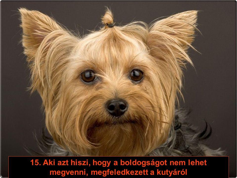 14. Ha a kutya eldönti, hogy otthagy téged, nem viszi el a vagyonodnak legalább a felét