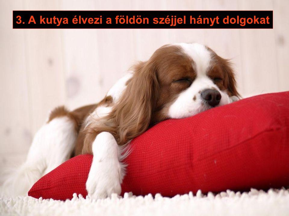 2. A kutya észre sem veszi, hogy más néven szólítottad