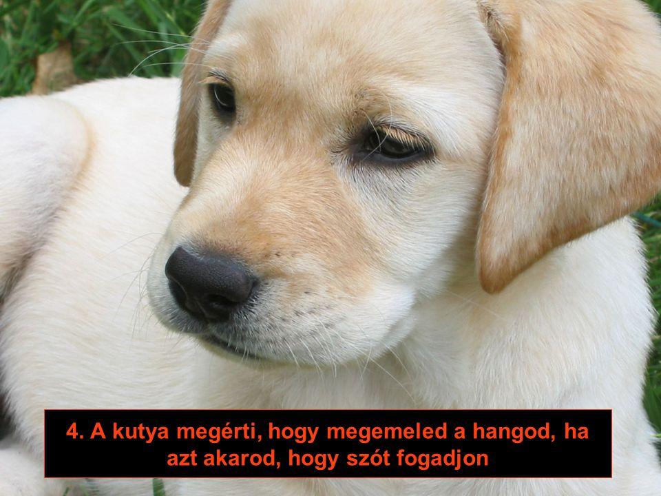 3. A kutya élvezi a földön széjjel hányt dolgokat