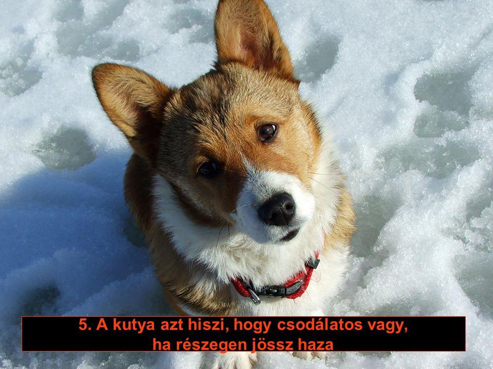 4. A kutya megérti, hogy megemeled a hangod, ha azt akarod, hogy szót fogadjon