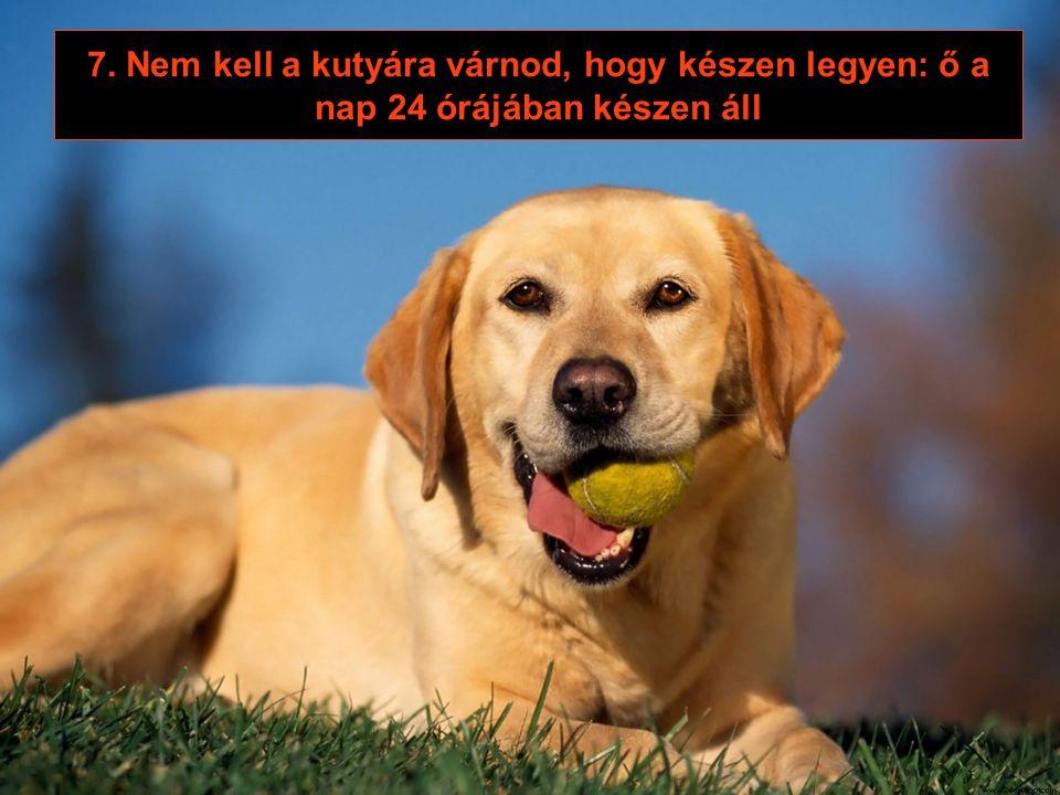 6. A kutyád szülei nem jönnek hozzád látogatóba