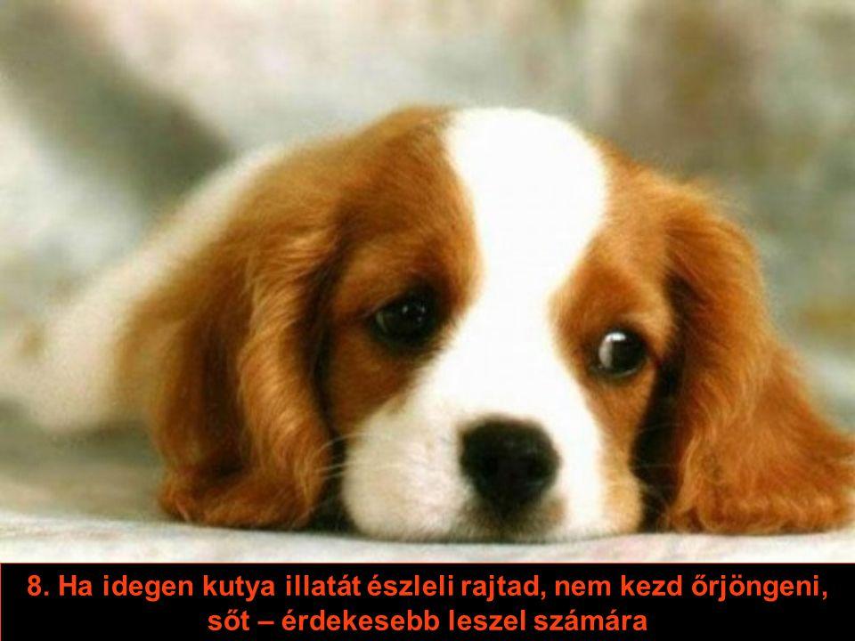 7. Nem kell a kutyára várnod, hogy készen legyen: ő a nap 24 órájában készen áll
