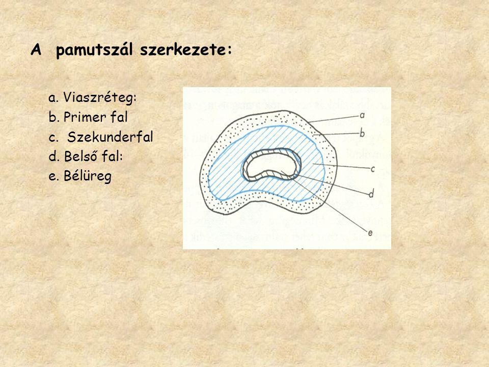 A pamutszál szerkezete: a. Viaszréteg: b. Primer fal c. Szekunderfal d. Belső fal: e. Bélüreg