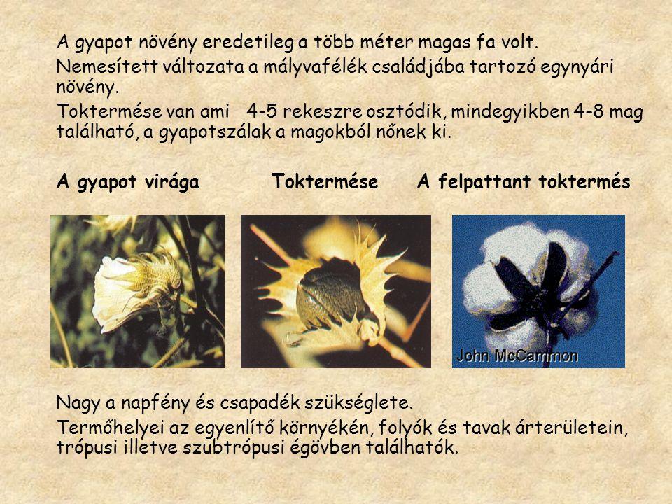 A magvas gyapot tisztítása:  Légáramlattal : a nehezebb szennyeződéseket távolítja el.