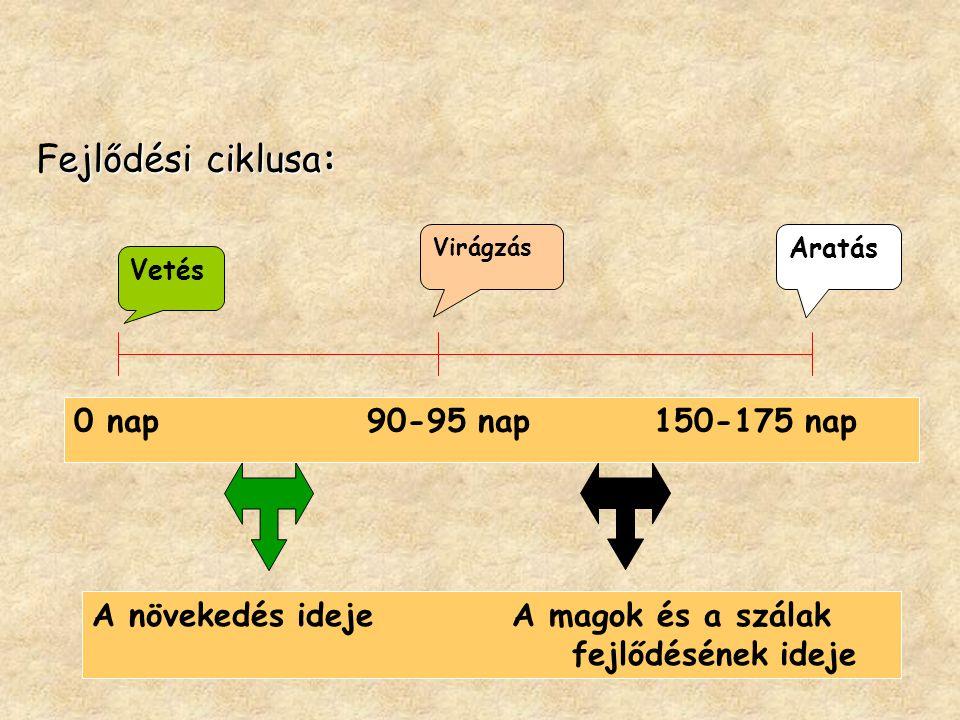 ejlődési ciklusa: Fejlődési ciklusa: Vetés Virágzás Aratás 0 nap 90-95 nap 150-175 nap A növekedés ideje A magok és a szálak fejlődésének ideje