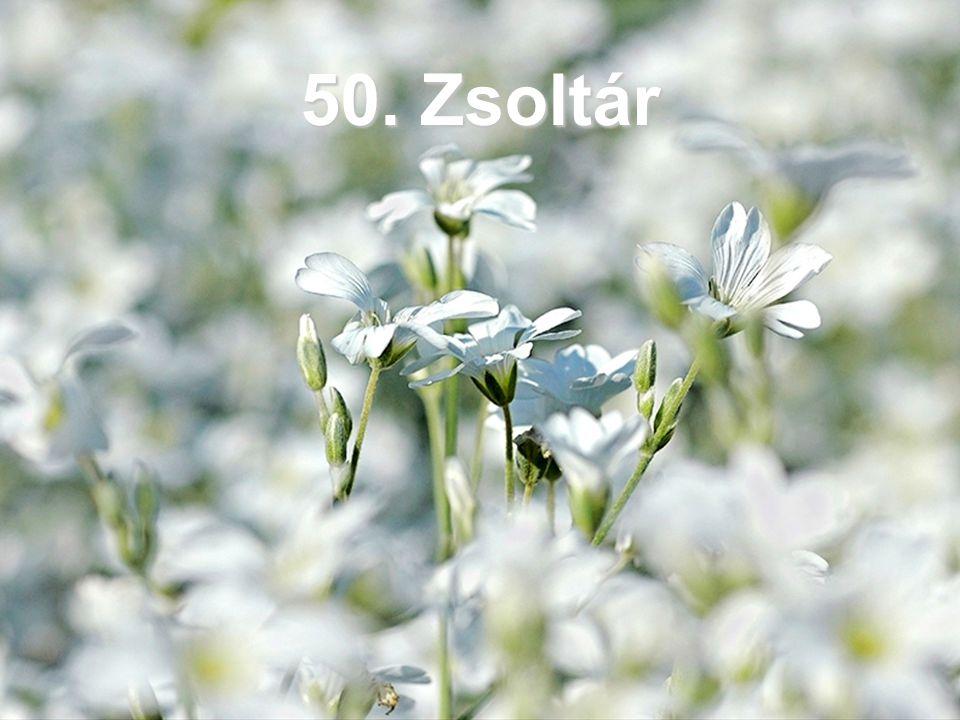 50. Zsoltár