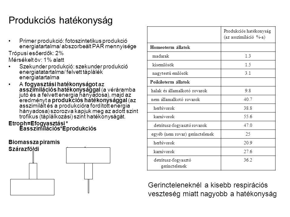 Produkciós hatékonyság Primer produkció: fotoszintetikus produkció energiatartalma/ abszorbeált PAR mennyisége Trópusi esőerdők: 2% Mérsékelt öv: 1% a