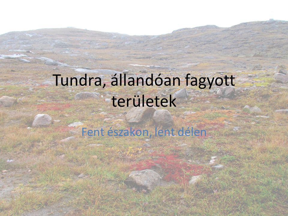 Tundra, állandóan fagyott területek Fent északon, lent délen