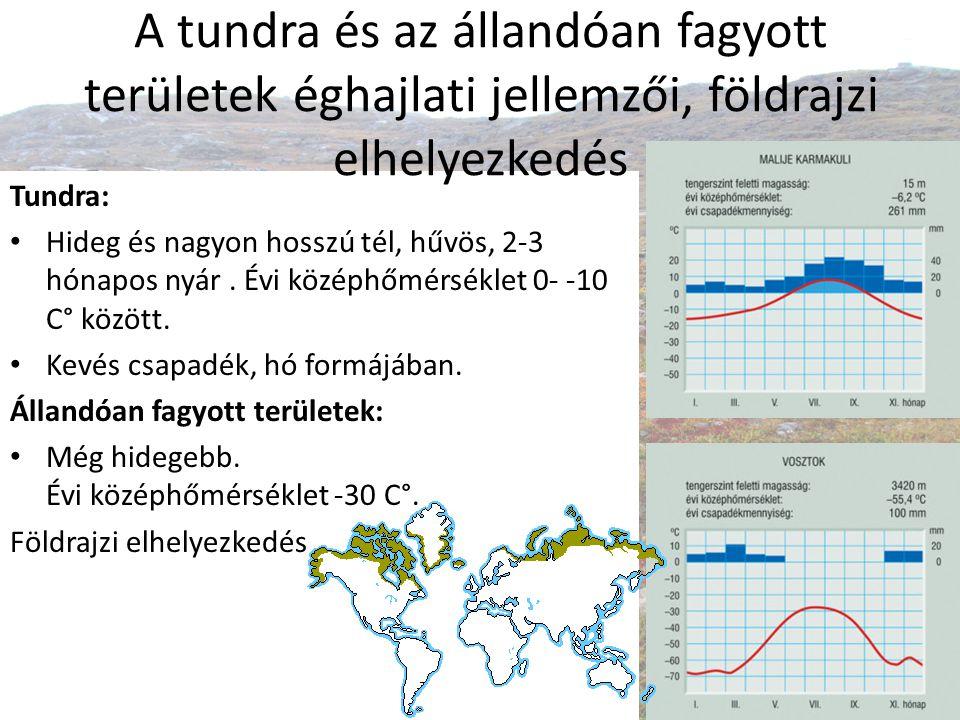 Tundra növényzetének tűrőképessége, növényzetének jellemzése, típusai Hidegtűrők Fénykedvelők (Nyáron majdnem egész nap süt a nap, nincs árnyékolás) Szárazságtűrők (A fagyott víz felvehetetlen, kevés a csapadék.) A fák az alacsony hőmérséklet miatt nem képesek megnőni, törpenövésűek maradnak.
