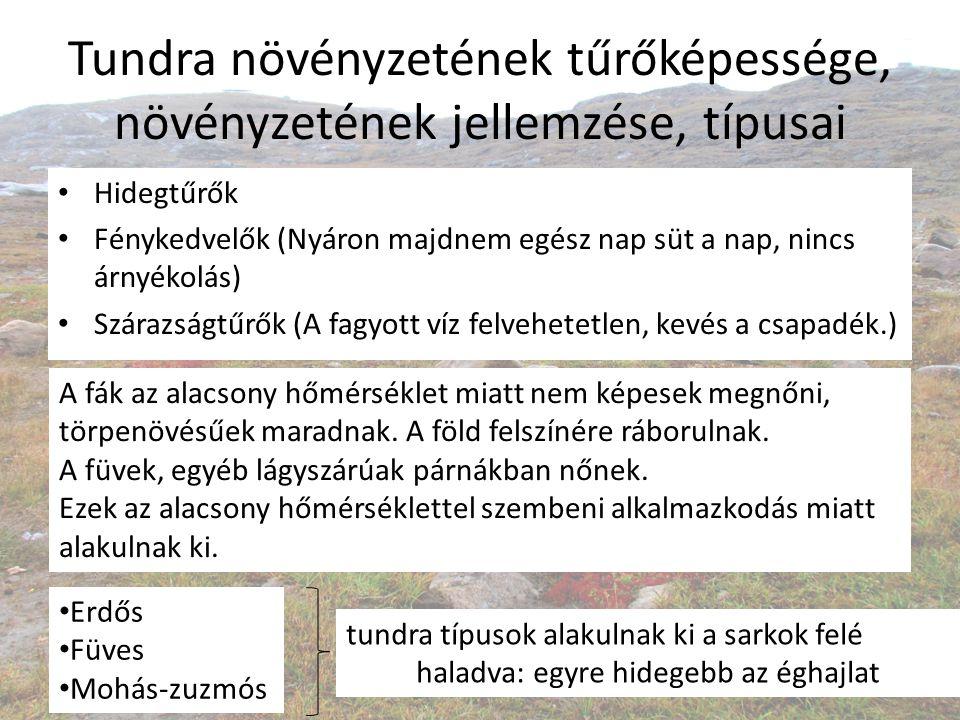 Tundra növényzetének tűrőképessége, növényzetének jellemzése, típusai Hidegtűrők Fénykedvelők (Nyáron majdnem egész nap süt a nap, nincs árnyékolás) S