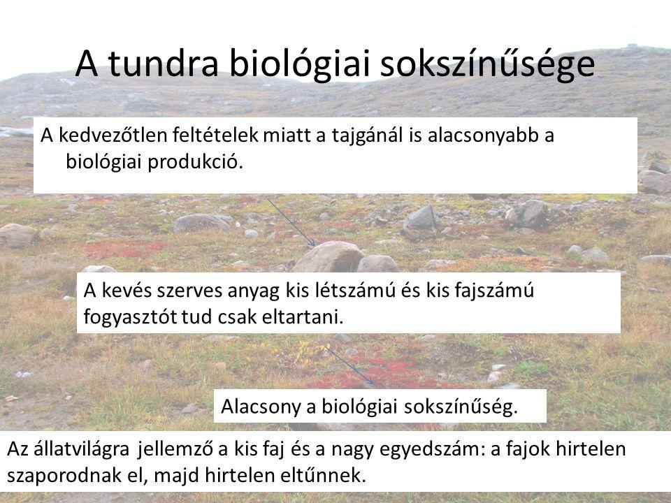 A tundra biológiai sokszínűsége A kedvezőtlen feltételek miatt a tajgánál is alacsonyabb a biológiai produkció. A kevés szerves anyag kis létszámú és