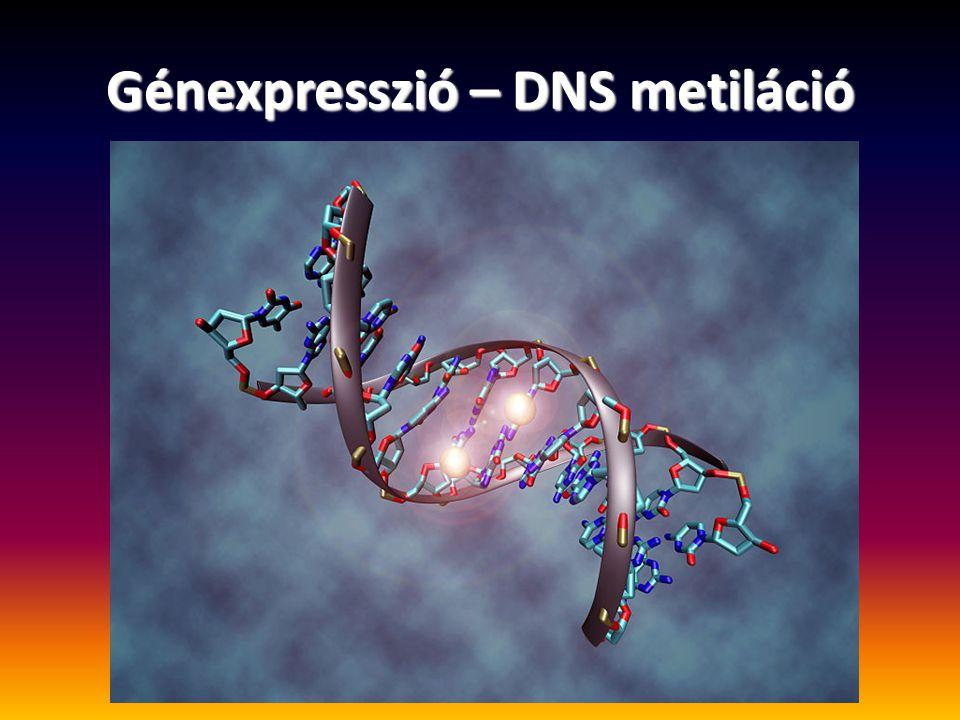 Génexpresszió – DNS metiláció