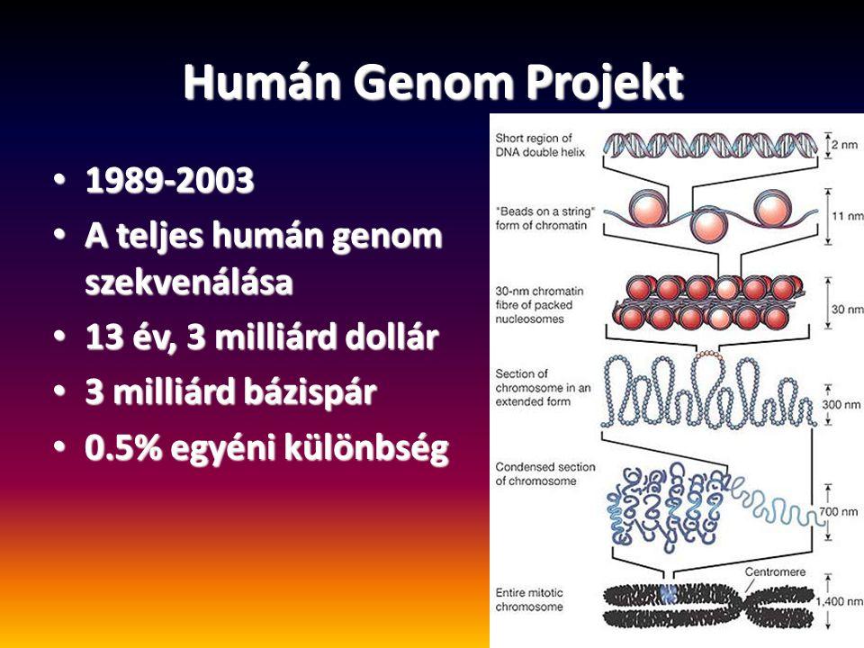 Humán Genom Projekt 1989-2003 1989-2003 A teljes humán genom szekvenálása A teljes humán genom szekvenálása 13 év, 3 milliárd dollár 13 év, 3 milliárd