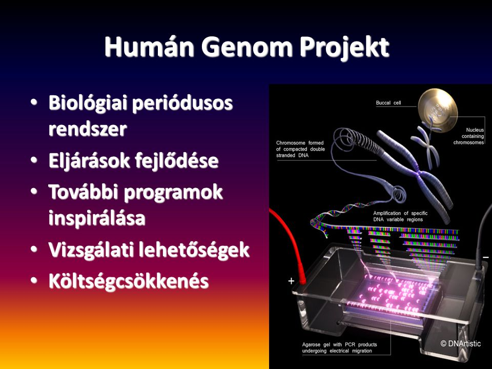 Humán Genom Projekt Biológiai periódusos rendszer Biológiai periódusos rendszer Eljárások fejlődése Eljárások fejlődése További programok inspirálása