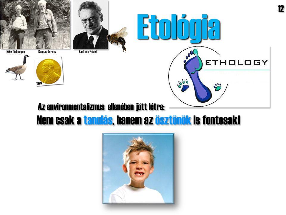 Etológia Niko Tinbergen Konrad Lorenz Karl von Frisch 1973 Nem csak a tanulás, hanem az ösztönök is fontosak! 12 Az environmentalizmus ellenében jött