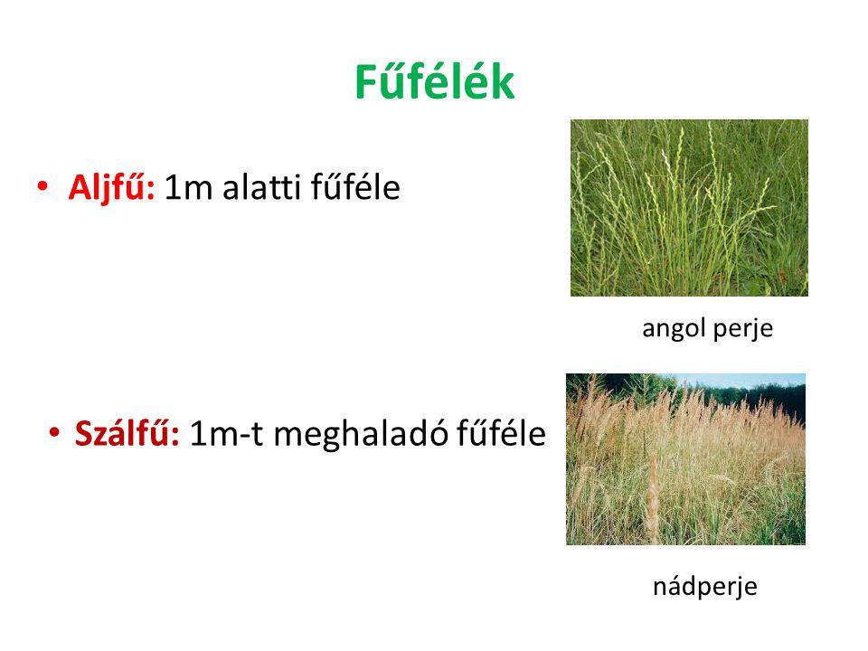 Fűfélék Aljfű: 1m alatti fűféle angol perje Szálfű: 1m-t meghaladó fűféle nádperje