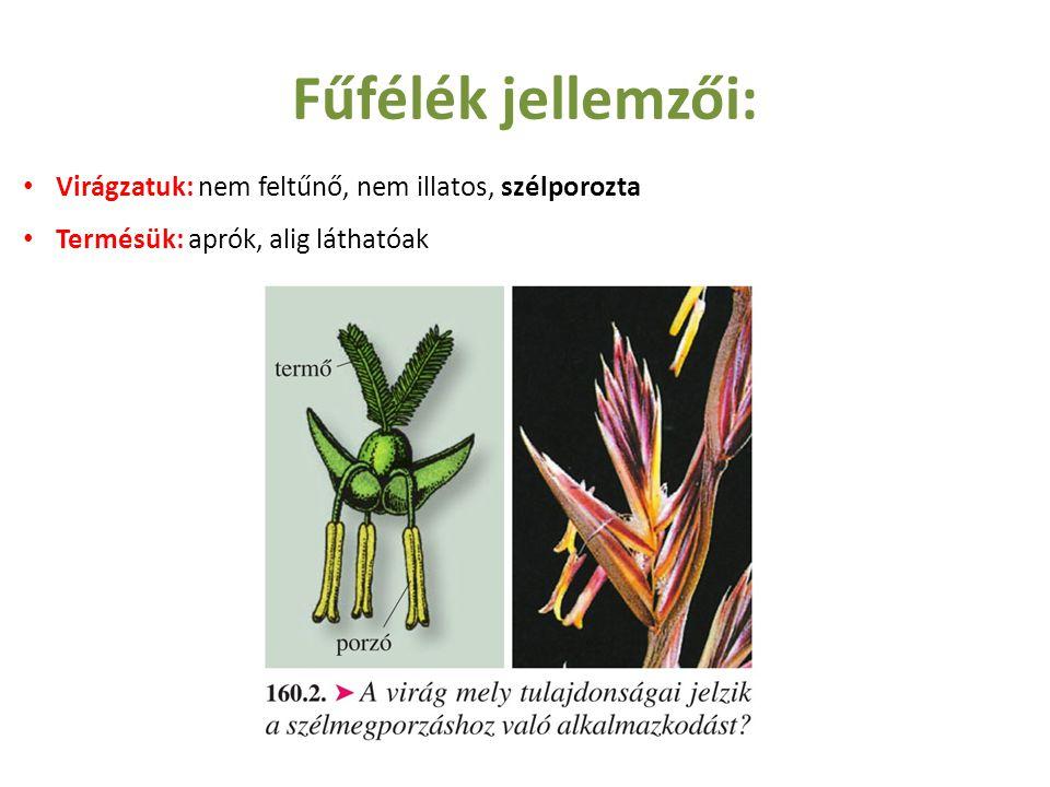 Fűfélék jellemzői: Virágzatuk: nem feltűnő, nem illatos, szélporozta Termésük: aprók, alig láthatóak